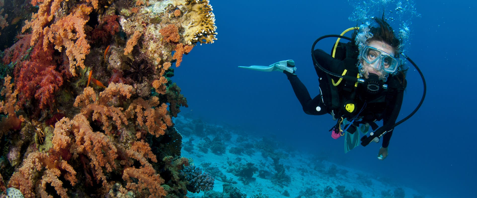 diving-top-banner