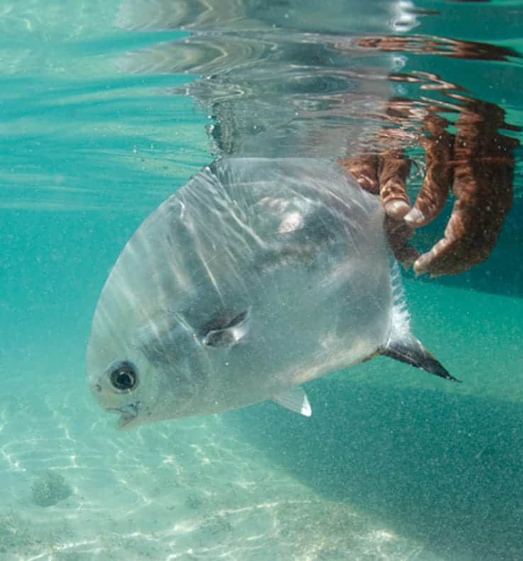Tropical fish in the Caribbean Sea