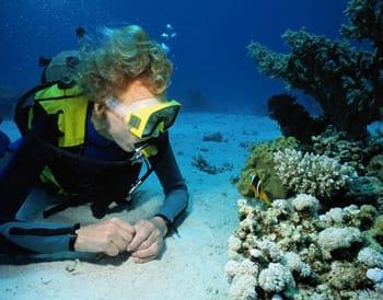 Diver watching a tropical fish off the coast of Ambergris Caye