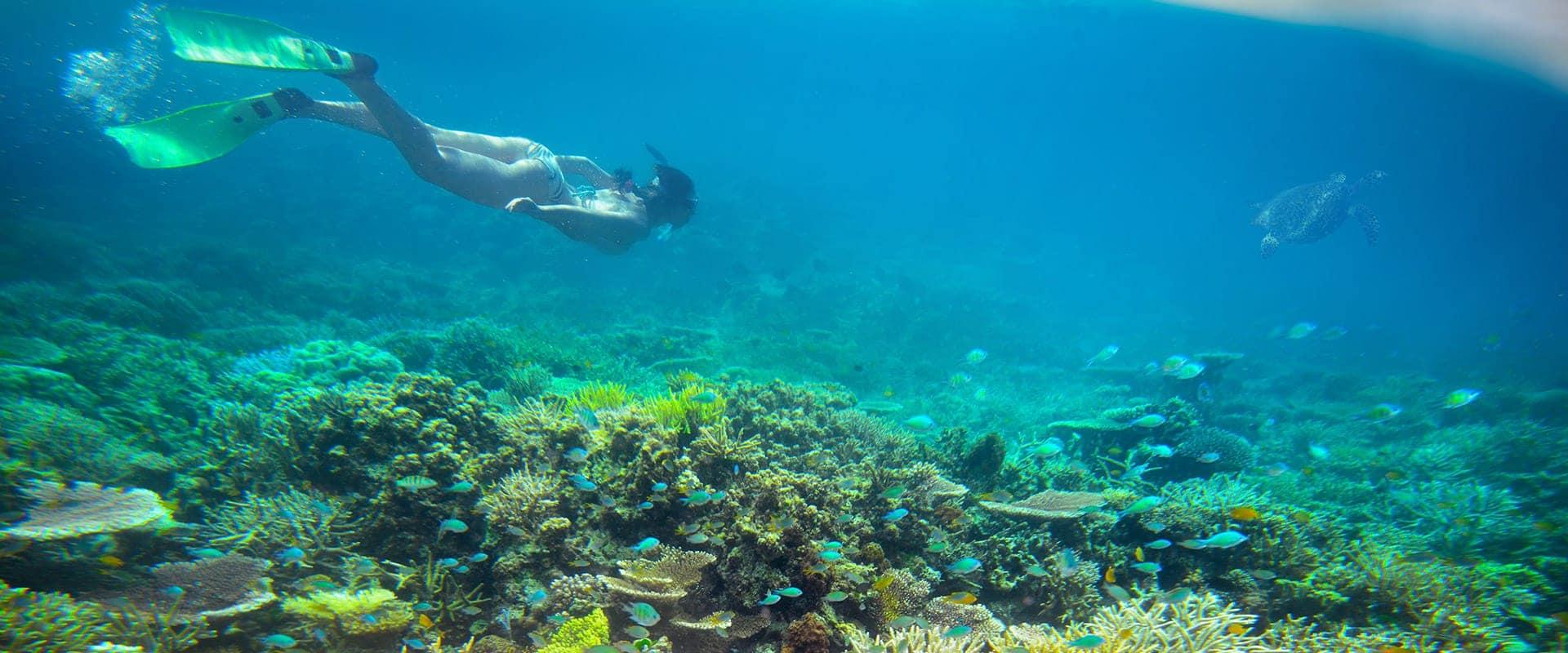 snorkeling-top-banner
