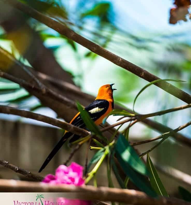 Tropical bird in Belize