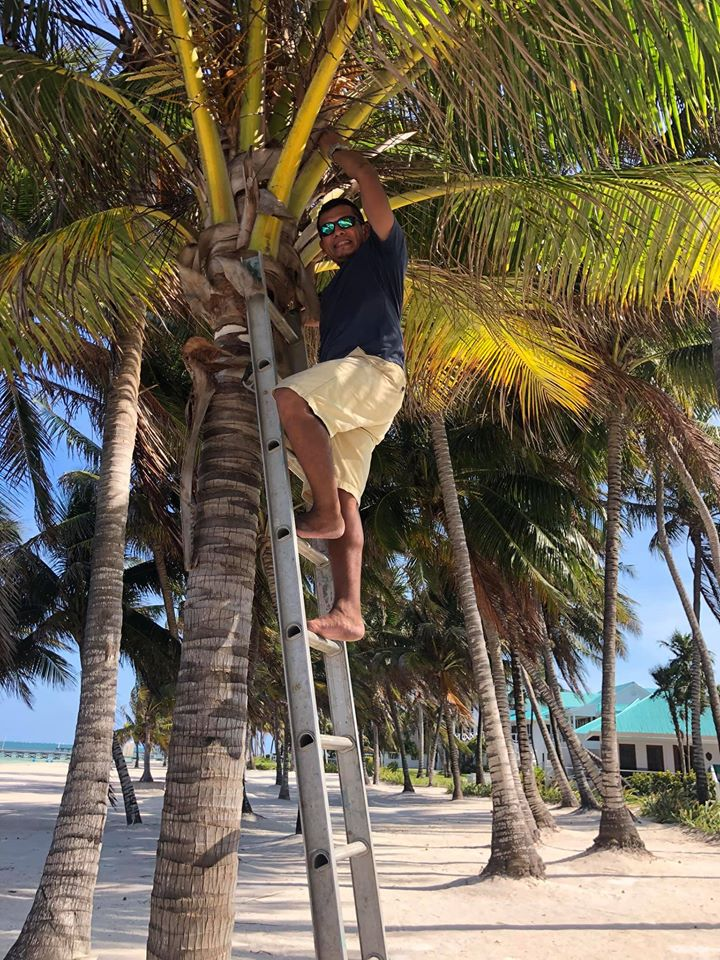 Luis Vasquez climbing a tree on the beach at Victoria House Resort in Belize