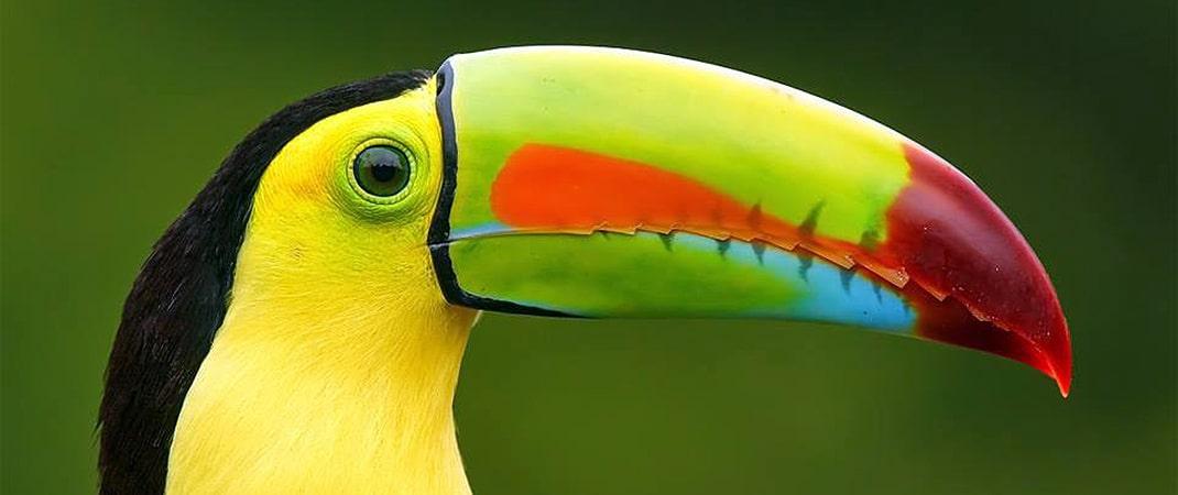Belize Birds at Victoria House Resort & Spa, Belize